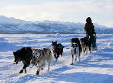 Dog Sledding -Full Day- [Winter]