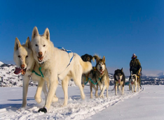 Dog Sledding -Half day- [Winter]
