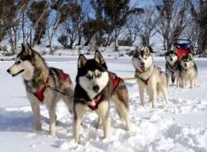 Dog Sled Ride & Snowshoeing Combo (November-April)